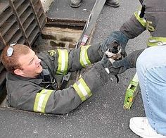 """a Humane Society, got a call from a woman who heard a cat crying beneath a drainage grate in a store parking lot, the Firefighters tried to coax the shivering black and white kitten out from its perch inside a pipe between two grates, but it was too frightened to move.""""The poor little thing was pale and shaking -- he was probably hypothermic,"""" The kitten, nicknamed """"Storm,"""" was taken to the Hilton Animal Hospital and  now he's eaten and is in a warming cage, and he seems to be brightening…"""