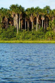 Laguna Guasaconica, Rio Morichal Largo, al sur del estado Monagas - Venezuela.