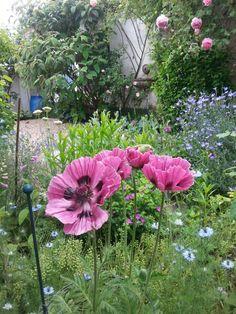Garden Impressions 1