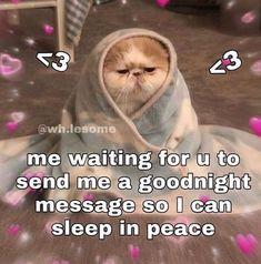 Cute Love Memes, Really Funny Memes, Stupid Funny Memes, Funny Relatable Memes, Haha Funny, Love You Funny, Good Night Meme, Cute Good Night, Freaky Mood Memes