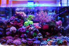 May 2011 NTOTM- BANDIT ANGEL'S 25g nano - Reef Central Online Community