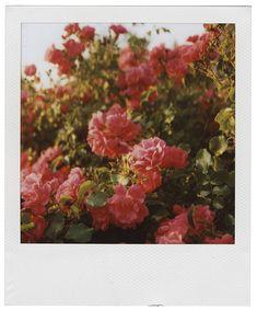 Polaroid Pictures Photography, Polaroid Photos, Polaroids, Artistic Photography, Film Photography, Street Photography, Wedding Photography, Polaroid Picture Frame, Flower Film