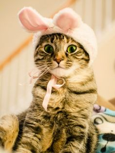 Choco Toujours: Easter bunny-cats
