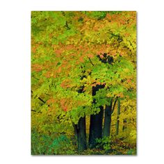 Kathie McCurdy 'Forest Beauty' Canvas Art