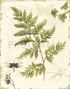 Ivies and Ferns - Fototapeter & Tapeter - Photowall