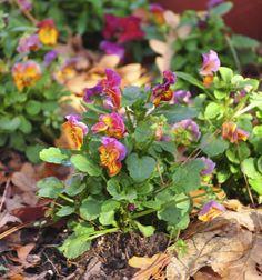 Flowers that bloom in fall www.fiskars.com