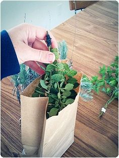Drying herbs in the fall for use through the