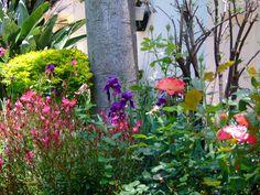In an English country garden........
