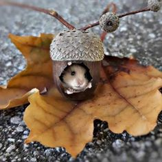 This too cute to be real - Animals wild, Animals cutest, Animals funny, Animals drawings Cute Creatures, Beautiful Creatures, Animals Beautiful, Cute Little Animals, Cute Funny Animals, Nature Animals, Animals And Pets, Autumn Animals, Cute Mouse