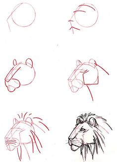 how to draw a lion's head