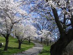 High Park in Spring, Toronto, Canada