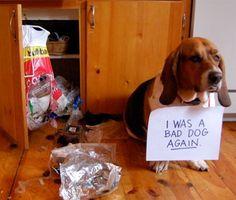 "Dog shaming confessions - ""I was a bad dog again"""