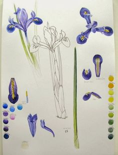 Botanical Sketches and Other Stories: Plans, promises and paintings 2014