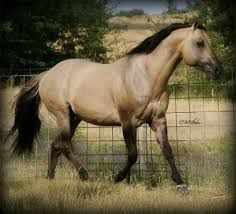 Image result for dun horse