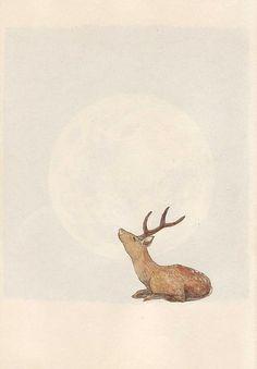 Deer considers the moon