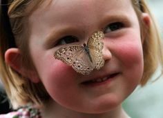 A cute little girl reacts as a Grey Pansy butterfly lands on her nose Butterfly House, Butterfly Kisses, Butterfly Wings, Butterfly Fashion, Butterfly Photos, Eskimo Kiss, Moth Caterpillar, Drawing Journal, Like Animals