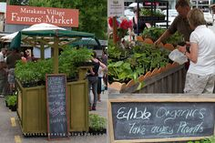 The Farmers' market in Matakana (NZ) is one of the cutest little markets I have seen so far. It's in the countryside up north not far from . Open Market, Commercial Design, Auckland, Farmers Market, New Zealand, Countryside, Around The Worlds, Island, Marketing