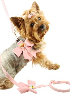 Fancy Dog Harness- Fashion Pet Harness, Step Dog Harness, Designer Dog Harness, Susan Lanci