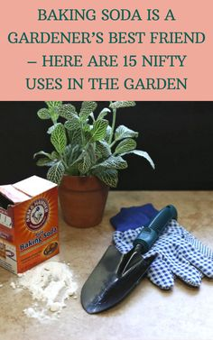 Baking Soda For Skin, Baking Soda Uses, Gardening For Beginners, Gardening Tips, Texas Gardening, Organic Gardening, Garden Projects, Projects To Try, Garden Ideas