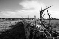 Luca Vieri fotografo #formentera #capdebarbaria #island