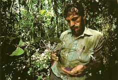 Dr. Alwyn Gentry holds an unknown species of flowering plant he has just found in the Choco region of Colombia.  National Geographic Magazine