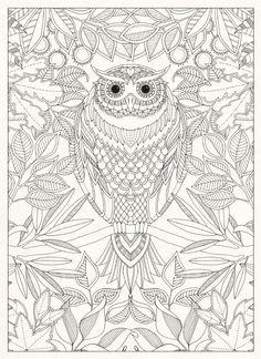 Hoot, hoot goes the owl in the Secret Garden