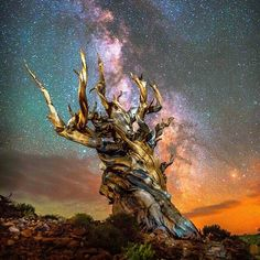 At 10,000 feet of altitude and a age of 4845 years old, this is one of the oldest trees in the world.
