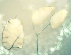 Hey, I found this really awesome Etsy listing at https://www.etsy.com/listing/178607047/flower-photography-lunaria-art-spring