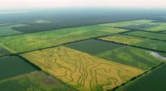 Arkansas rice fields from the air. [From: Aerial America]