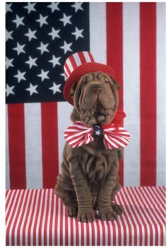 This post gives some great Fourth of July #PetSafety tips. This #patriotic pooch is all ready to celebrate!