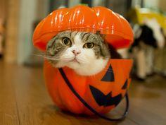 maru. Happy Halloween! 2015 私信