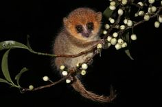 From teensy mouse lemurs to lemurs with freakishly long fingers, we're celebrating some weird yet cute and entirely underrepresented lemur species.
