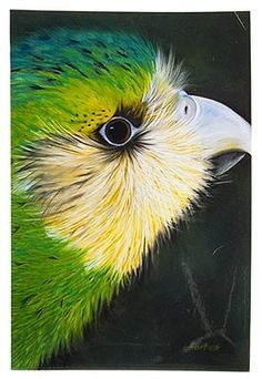 Kakapo Art Block, Large - Robyn Forbes http://www.shopnewzealand.co.nz/en/cp/Robyn_Forbes_Kakapo_Prints