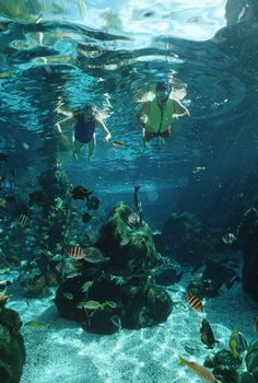 Cross Typhoon Lagoon's manmade coral reef and get a close-up look at its inhabitants as you snorkel in 362,000 gallons of saltwater. Only at the Shark Reef, Typhoon Lagoon, Walt Disney World Resort.
