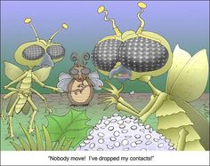 Hilarious fly funny jokes and humor cartoons, stupid fly wearing lenses, funny cartoons