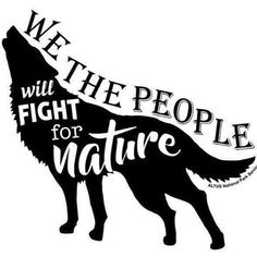 """My Pack of Wolves on Twitter: """"https://t.co/YQy0ujLWYC"""""""