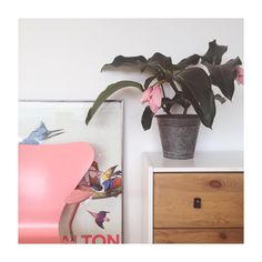 This beauty just moved in #crazyplantlady #plantsofinstagram #urbanjungle #urbanjunglebloggers #medinilla #waltonford#lousianamuseum #arnejacobsen #7stol#pink#danishdesign #nordicliving#modernclassic#midcenturymodern#bobedre#fritzhansen