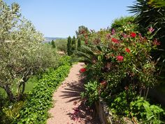 Middle Earth Way between the villa and the olive garden