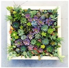 I would love to have a small patch in my room... Succulent <3