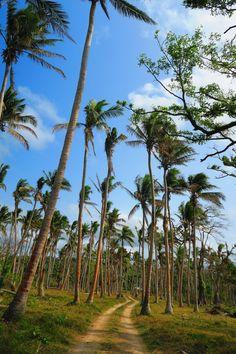 Roadtripping around Eafte Island in Vanuatu