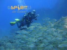 www.divingspirit.es #EspiritudeBuceo #Padi5StarDiveCentre #PadiDiveCentre #AqualugPartnerCentre #DivingSpirit #Padi #S24642 #Aqualung #Apeks #DanEurope #Diveassure #tripadvisor #Buceo #Scuba #Dive #Diving #SnorkelTrips #Snorkel #DivingCentre #DiveLife #Holidays #PuertodeSantiago #LosGigantes #PlayadeLaArena #Tenerife #Canaries #CanaryIslands #Canarias #IslasCanarias #Spain