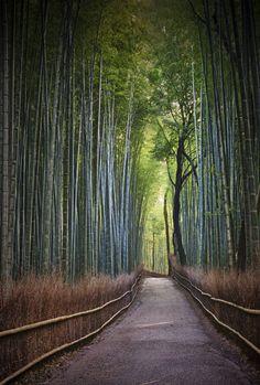 Arashiyama Path Of Bamboo