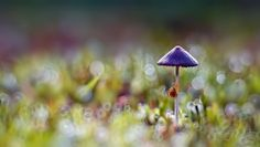 the small snails by komarudin