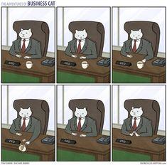 The Adventures of Business Cat - Imgur