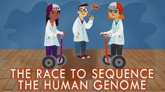 View full lesson: http://ed.ted.com/lessons/the-race-to-sequence-the-human-genome-tien-nguyen In 1990, The Human Genome Project proposed to sequence the enti...