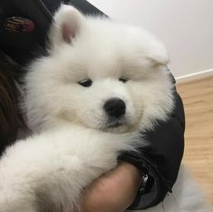 Like if you want to hug him! Baby Puppies, Cute Puppies, Cute Dogs, Dogs And Puppies, Cute Babies, Funny Animal Videos, Funny Animal Pictures, Fluffy Animals, Cute Baby Animals