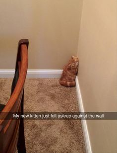 Cuteness Overload Tiny Kitten Snaps Snaps) - World's largest collection of cat memes and other animals Funny Animal Memes, Cute Funny Animals, Funny Animal Pictures, Cute Baby Animals, Cat Memes, Funny Pics, Funny Memes, Videos Funny, Hilarious