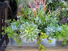 Beautiful succulent planter