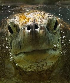 hey du - ich bin´s noch mal | meeresschildkröte, schildkröte, landschildkröten
