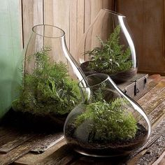 Recycled+Glass+Bubble+Terrarium